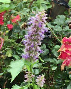 幸せにを呼ぶ青い蜂(右)