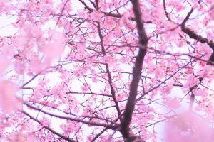 桜と空の写真素材