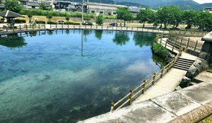 丸池湧水の写真2
